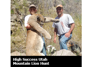 Utah Mountain Lion Hunt