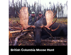 British Columbia Moose Hunt