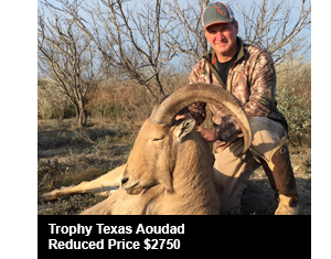 Trophy Texas Aoudad